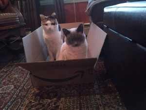 lulu and smoke in box